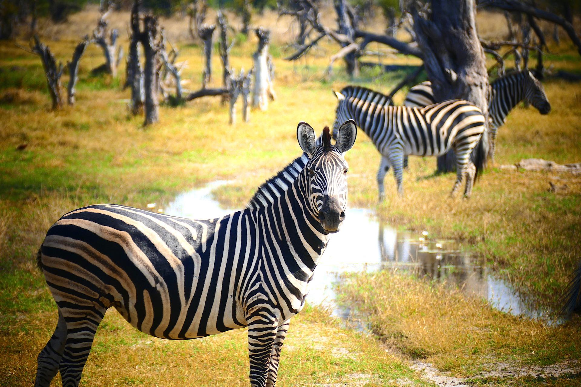 httpswww.chezbru.com_Toute la beauté de la Tanzanie à découvrir le temps d'un voyage